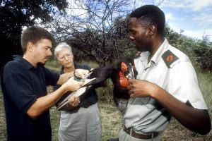 Ann Turner (mid), Founder of the Project, with two other scientists are looking after one of the birds.