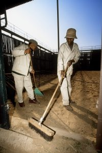 Men are cleaning a booma before the bidders arive to have a look on the auctioned wildlife.
