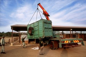 A sold rhino is loaded on a trailer and soon delivered to its new home.