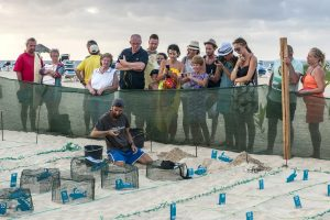 Tourists follow the work of scientists and volunteers in a turtle hatchery near their hotel.