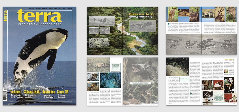 """Magazin """"terra"""" / Foto- u. Textreportage über Afrikanische Wildhunde"""